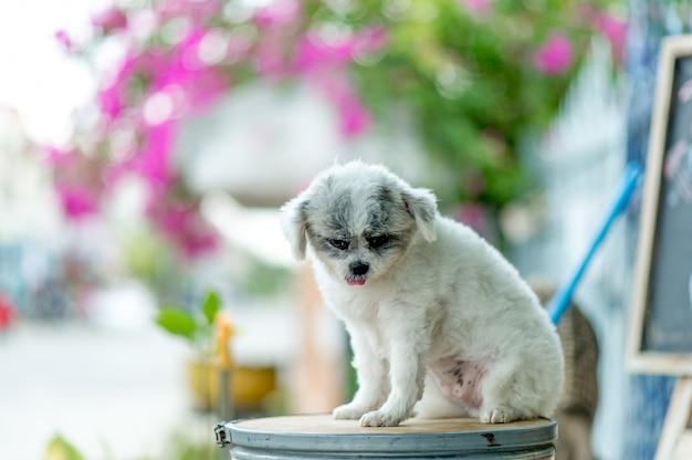 Immagine del cane bianco, tiro di foto sveglio, concetto del cane di amore