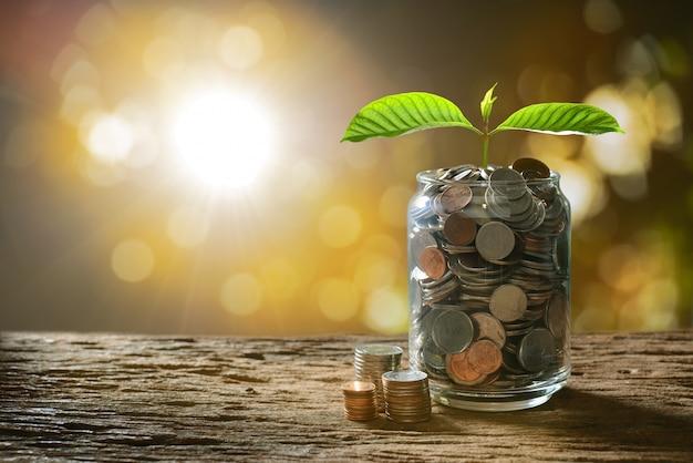 Immagine del mucchio delle monete con la pianta sulla cima in barattolo di vetro per l'affare