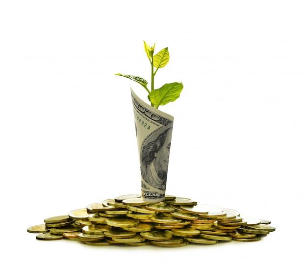 Immagine del mucchio delle monete e della banconota rotolata con la pianta sull'affare di mostra superiore