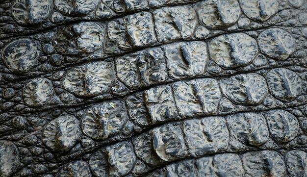Immagine del primo piano della priorità bassa di struttura della pelle del coccodrillo