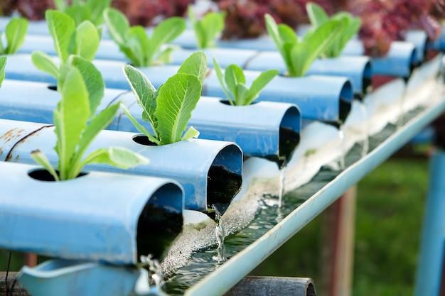 Immagine dell'azienda agricola di verdure di coltura idroponica