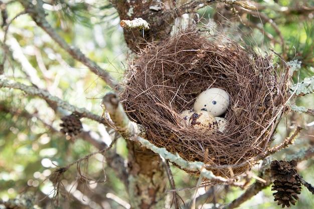 Immagine della natura dell'uovo nell'albero di nido
