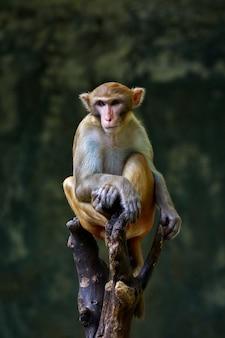 Immagine della scimmia che si siede su un ramo di albero. animali della fauna selvatica.