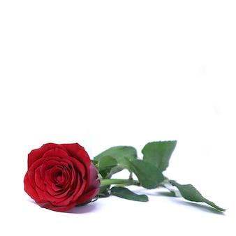 Immagine di amore della cartolina d'auguri floreale reale del biglietto di s. valentino di beautifuk