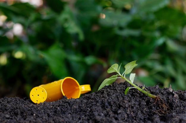Immagine di preparazione per piantare alberi