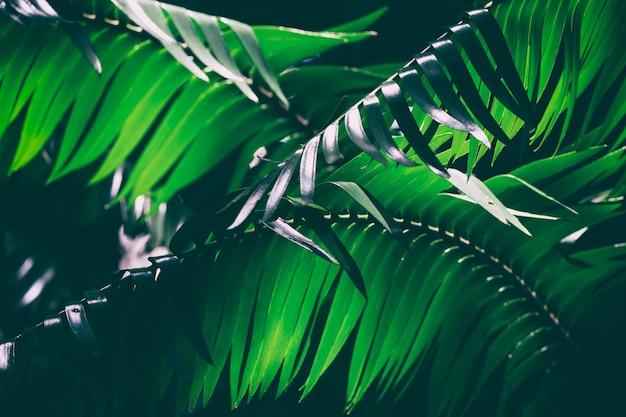 Immagine di sfondo scura delle foglie di palma
