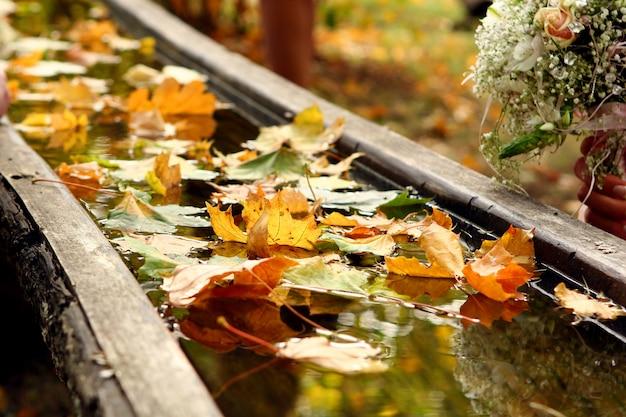 Immagine f del backgroung di giorno di autunno