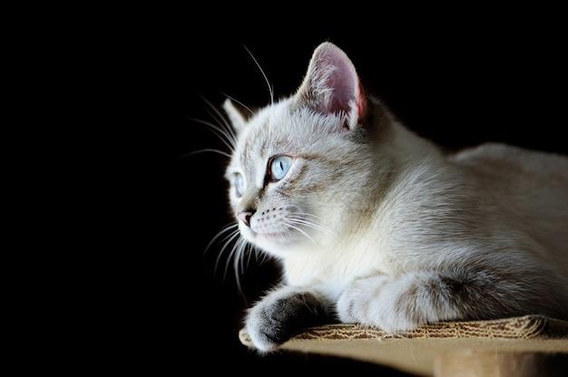 Immagine graziosa del primo piano del gattino