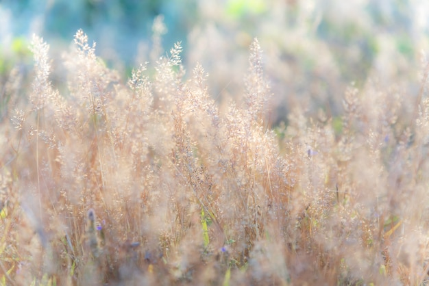 Immagine morbida vaga vivido dolce luminoso colorato di fiore di erba.