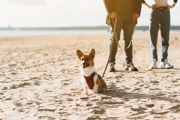 Immagine ritagliata di persone che camminano in spiaggia con il cane. piedi di donna e uomo in piedi sulla sabbia