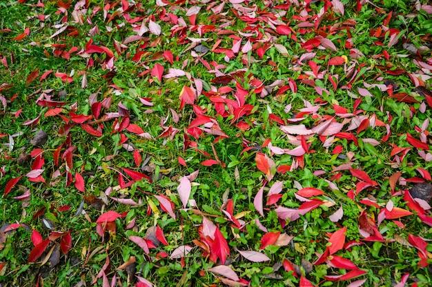 Immagine variopinta del backround delle foglie rosse di autunno cadute