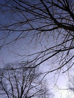 Immagine verticale dei rami degli alberi sotto la luce del sole e un cielo blu