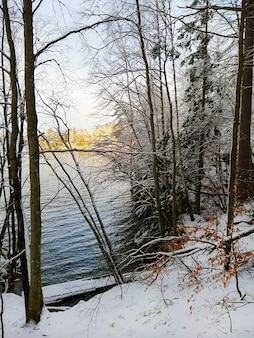 Immagine verticale di alberi coperti di neve con un fiume sotto la luce del sole sullo sfondo