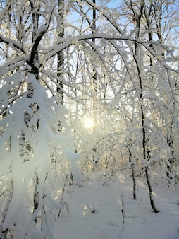 Immagine verticale di alberi in una foresta coperta di neve sotto la luce del sole a larvik in norvegia