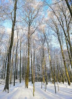 Immagine verticale di una foresta circondata da alberi coperti di neve sotto la luce del sole in norvegia