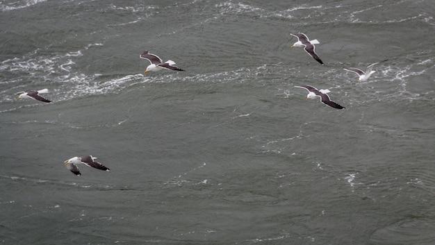Immagine vicina di un uccello messo le piume olandese