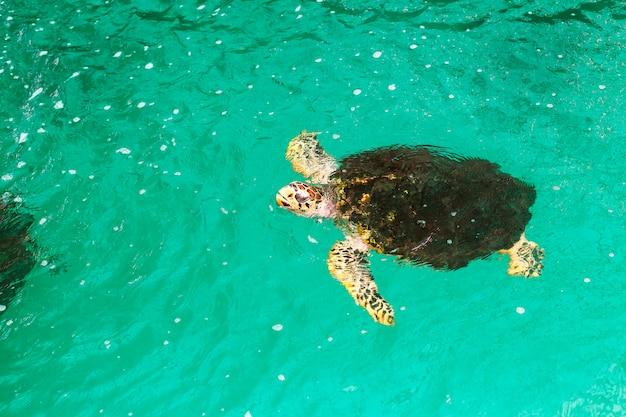 Immagini ravvicinate di palline di tartaruga marina in uno stagno di vivaio creato da ambientalisti.