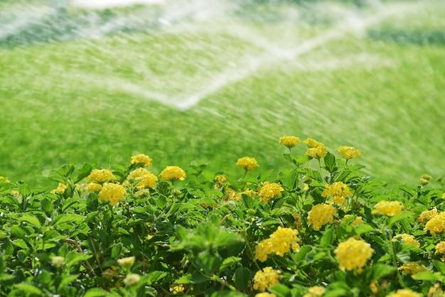 Impianto di irrigazione automatico con erba e siepe