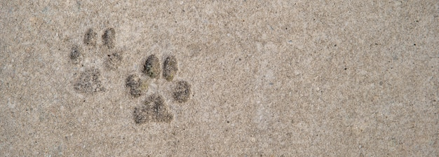 Impronta di zampe di cane su calcestruzzo