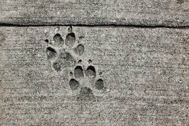 Impronte di cane stampate in cemento marciapiede