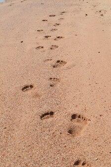 Impronte nella sabbia sul mare