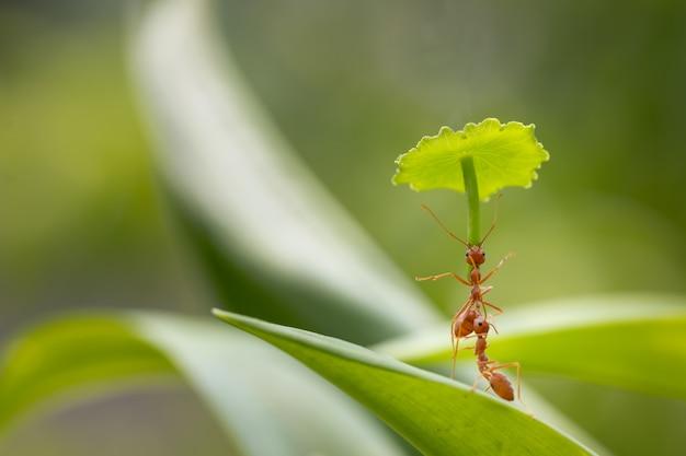In piedi di azione della formica. non trasporta l'ombrello per protezione