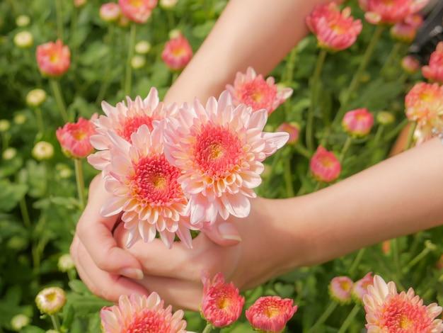 In possesso di un bel fiore di crisantemo rosa in entrambe le mani con sfondo vista giardino