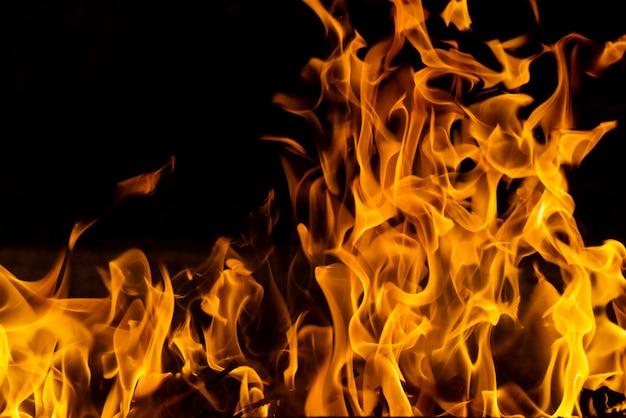 Incendio boschivo del primo piano