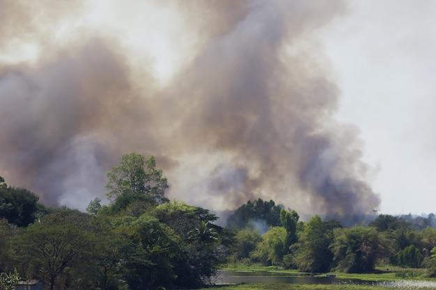 Incendio boschivo nella natura.