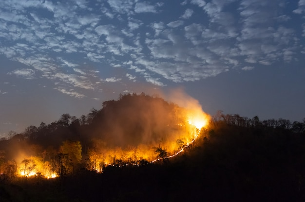 Incendio boschivo, wildfire.