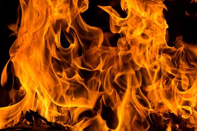 Incendio forestale del primo piano per fondo