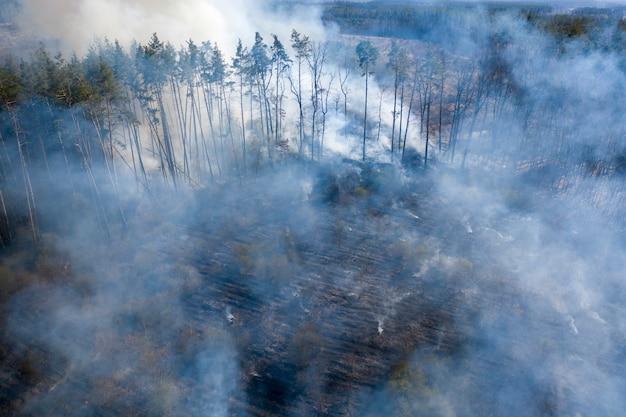 Incendio nella foresta, regione di žytomyr, ucraina.