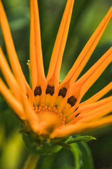 Incredibile fioritura tropicale fresca gialla e foglie verdi