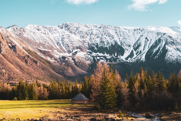 Incredibile paesaggio con alberi sullo sfondo delle cime innevate delle montagne altai