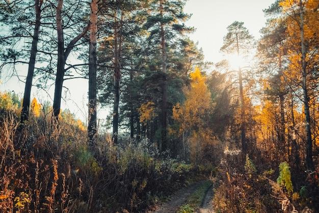 Incredibile paesaggio scenico al mattino presto nella foresta di autunno.