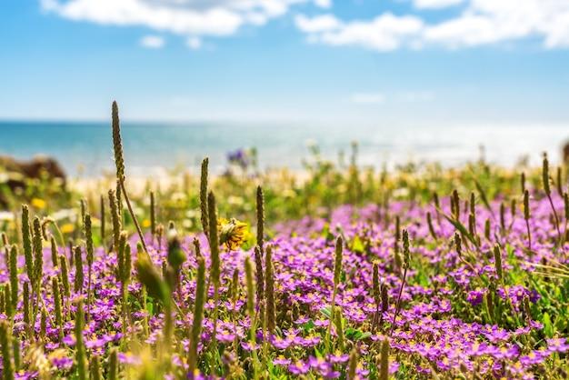 Incredibile vista sul mare di prati di spiagge, con uno sfondo al mare atlantico del portogallo. falesia, albufeira. lo sfondo è sfocato.