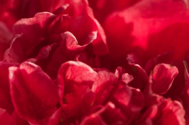 Incredibili petali di fiori freschi vinosi