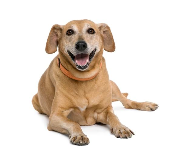 Incrocio sorridente o cane di razza mista. ritratto di cane isolato
