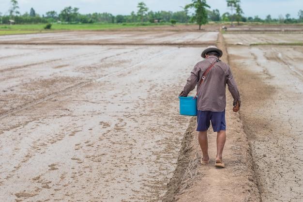 Indietro del coltivatore asiatico che cammina con il secchio blu alla fattoria di riso