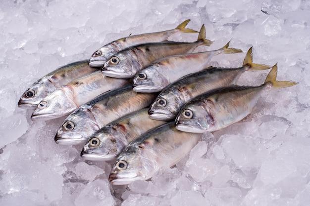 Industria del pesce di mare all'ingrosso al distributore al dettaglio di frutti di mare import export business pesce congelato