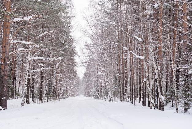 Innevato sfuggente nella strada di distanza nella foresta invernale.