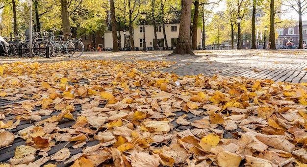 Inquadratura dal basso di un edificio accanto a una serie di biciclette circondato da alberi e foglie secche
