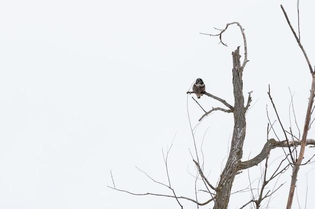 Inquadratura dal basso di un gufo su un ramo di un albero durante il giorno in inverno