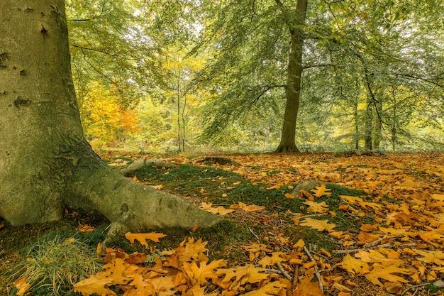 Inquadratura dal basso di un parco coperto di foglie circondato da alberi e cespugli