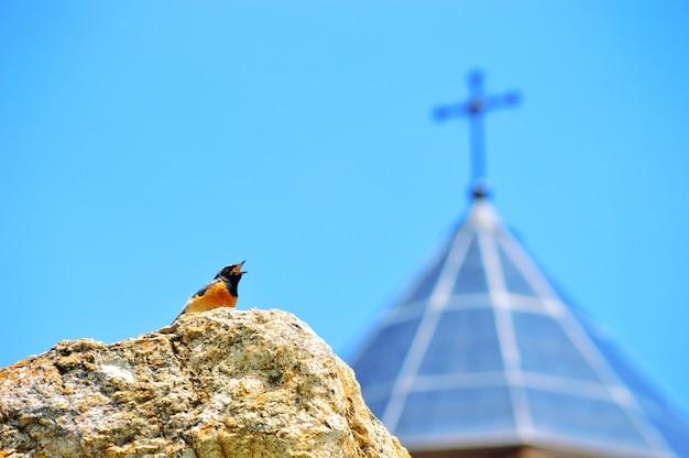 Inquadratura dal basso di un uccello su una roccia mentre cinguetta