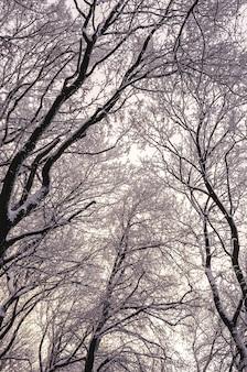 Inquadratura dal basso verticale degli alberi ad alto fusto coperti di neve in inverno