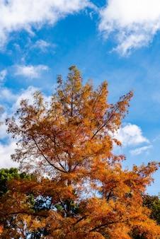 Inquadratura dal basso verticale di un albero di arancio in autunno e un cielo blu