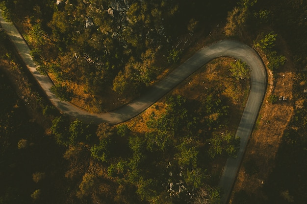 Inquadratura dall'alto di una strada tortuosa circondata da molti bellissimi alberi a esposende