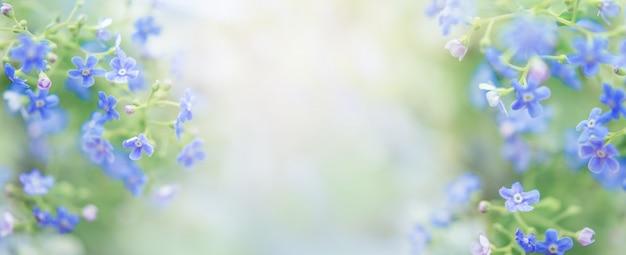 Insegna delicata di estate con i fiori in blu