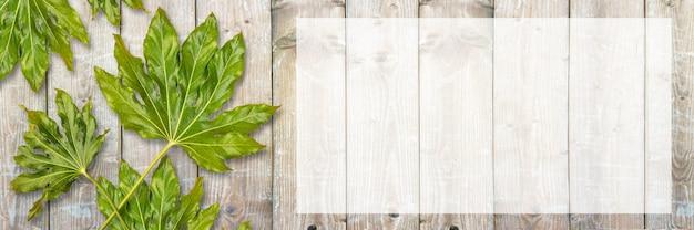 Insegna della composizione piana in disposizione con le foglie verdi sulla tavola di legno bianca